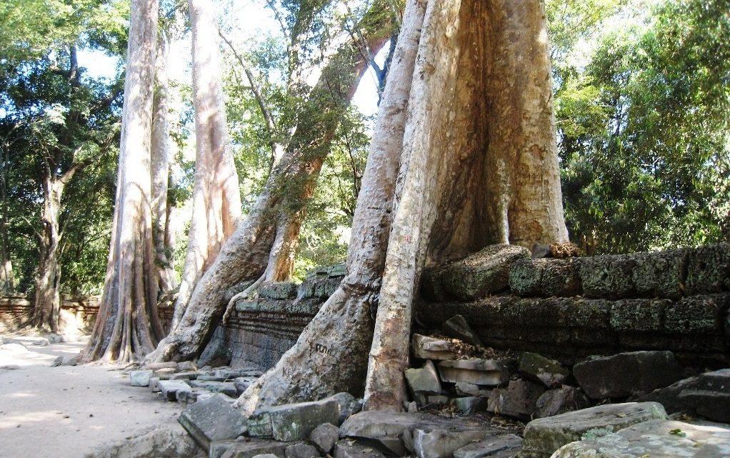 À voir et à faire durant un voyage au Cambodge
